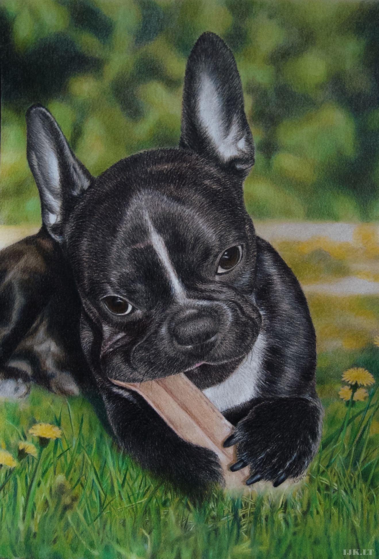 Dog portrait, puppy drawing, animal artwork, nature